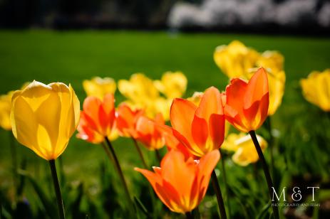 Wenham, MA (Spring 1)